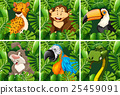Wild animals in the forest 25459091