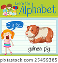 Flashcard letter G is for guinea pig 25459365