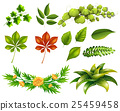 Different kinds of leaves 25459458