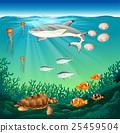 Sea animals swimming under the sea 25459504