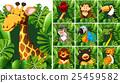 野生生物 动物 长颈鹿 25459582