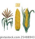 vegetable, ingredient, corn 25488943