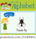 english, alphabet, child 25489841