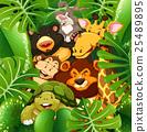 野生生物 动物 熊 25489895