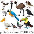 Different types of wild birds 25489924