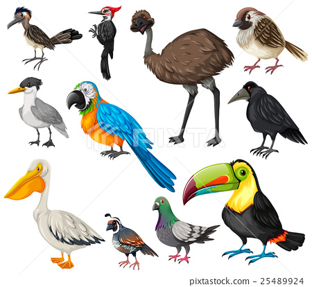 Different types of wild birds 25489924