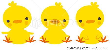 Chicks image illustration - Stock Illustration [25497867] - PIXTA