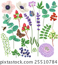 Floral elements set 25510784
