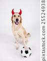 Animal companion and me 003 25524938
