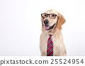 Animal companion and me 011 25524954