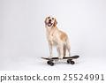 Animal companion and me 029 25524991