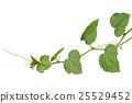 Vine Branch, Vine leaves on white background 25529452