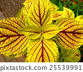 decorative plant, botanic, botanical 25539991