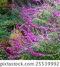 가을, 식물, 화단 25539992