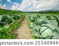 Tsumagoi村的白菜田 25540949