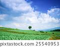 Tsumagoi村的白菜田 25540953