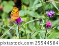 "a butterfly ""silver-washed fritillary"" 25544584"