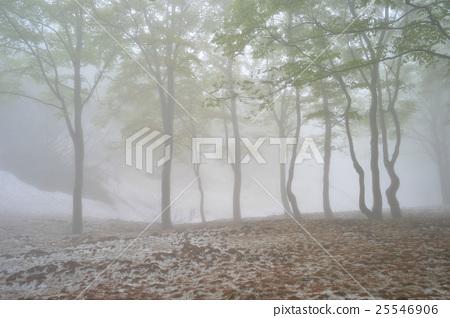 新鮮的綠色和多雪的山毛櫸森林 25546906
