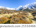 Dry weed grass to mount cook, New Zealand 25550466