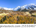 Dry weed grass to mount cook, New Zealand 25550467