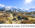 Dry weed grass to mount cook, New Zealand 25550468