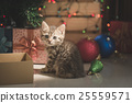 kitten playing in a gift box 25559571