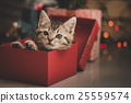 kitten playing in a gift box 25559574