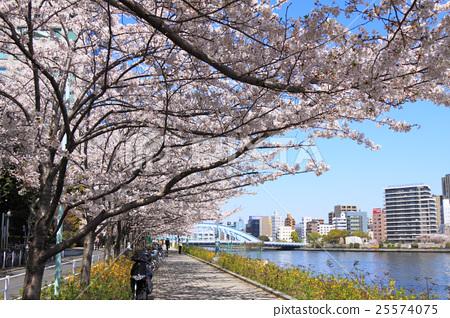 樱花盛开Sumidagawa Nagashiro桥 25574075