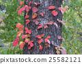 poison, ivy, autumn 25582121