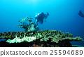 กลุ่มของปะการัง Kushimoto 25594689
