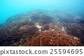 珊瑚 珊瑚礁 殖民地 25594695