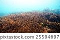 珊瑚 珊瑚礁 簇 25594697