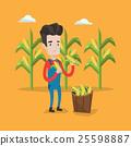 Farmer collecting corn vector illustration. 25598887
