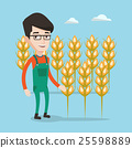 Farmer in wheat field vector illustration. 25598889