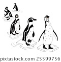 Penguin on outline ice.  25599756
