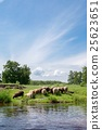羊 綿羊 河 25623651