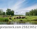 羊 綿羊 河 25623652