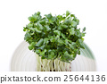 vegetable, vegetables, botanic 25644136