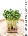vegetable, vegetables, botanic 25644137