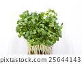 vegetable, vegetables, botanic 25644143