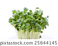 vegetable, vegetables, botanic 25644145