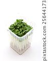 vegetable, vegetables, botanic 25644173