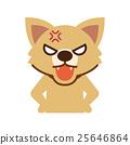 怒る犬 25646864