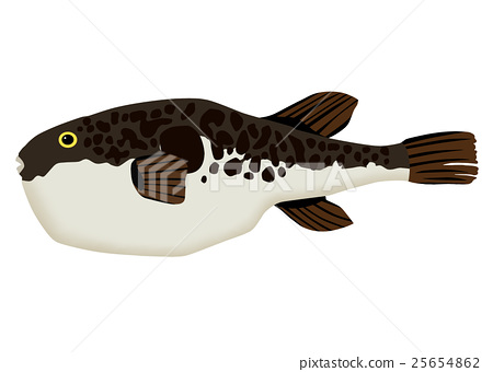 Puffer fish 25654862