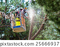 Professional Lumberjacks cuts trunks on the crane 25666937