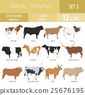 Cattle breeding. Cow, bulls breed icon set 25676195