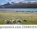 山峰 羊 綿羊 25680359