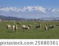 山峰 羊 綿羊 25680361