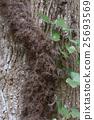 Poison ivy 25693569
