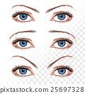 Vector female eyes isolated on white 25697328